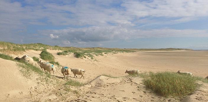 EP-4-dynamisch-landschap-texel-den-hoorn